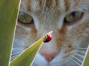 curious+cat